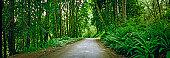 Road-wilderness