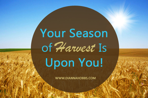 Season-of-harvest copy