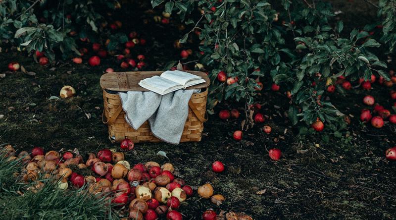 Harvest-dianna-hobbs
